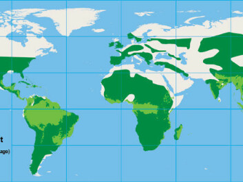 Today's distribution of rainforest areas compared to its prevalence in the Cretaceous period. In the hot conditions in the late Cretaceous and early Tertiary periods some 80-50 years ago, palm trees were widespread in the Northern hemisphere, including Greenland.