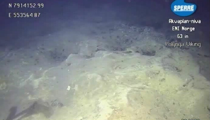 Mapping marine life before oil drilling starts
