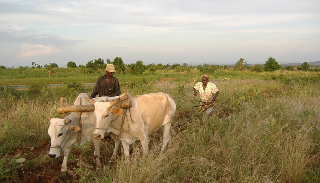 Buying locally-grown produce is commonly perceived as a sustainable choice. But this choice could also undermine the living conditions of farmers on the other side of the planet and could thus have negative consequences for the sustainability on a global level. (Photo: Wikimedia Commons)