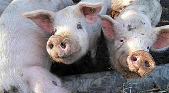 Don't blame the pigs for new flu types