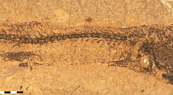 Colour secrets revealed in fossilised fish-eye