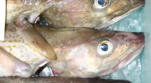 Bad news for greedy fishermen