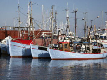 To secure a future for the fishing industry, it's necessary to maintain quotas to ensure that the endangered stocks escape the fishermen's nets. (Photo: Colourbox)
