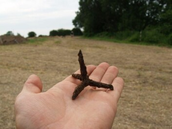 Caltrops are very unpleasant to step on, and that makes them a useful tool in wars – and apparently they were used as early as in the Viking Age. (Photo: University of Aarhus)