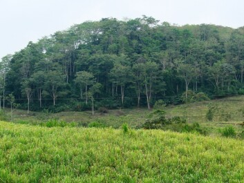 Costa Rica: shade-grown coffee is being converted into grazing land for cattle, sugarcane production and other forms of farming. This leads to a loss of forest-like areas and the environmental services they provide. (Photo: Aske S. Bosselmann)