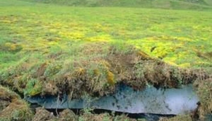 Thawing permafrost emits more carbon than expected