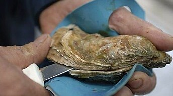 Oysters are more complex than we think