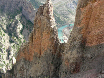 The tiny herb can only be found on these two cliff faces on the Spanish side of the Pyrenees. (Photo: García et al.)