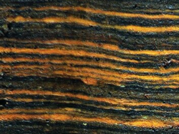 In the sediment cores, the scientists could measure the ratio of manganese to iron, which enabled them to see how the North Atlantic Oscillations had given either warm and wet or cold and dry winters over the past 5,200 years. Layers in the sediment are like growth rings in trees, telling researchers how the oscillations developed from year to year. (Photo: Mads Faurschou Knudsen)