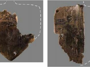 Pictured on the left is the underside of the paddle in the picture at the top with clearly visible paint. On the right is a semi-preserved, painted paddle. (Photo: Derek Butler, Moesgård Museum)