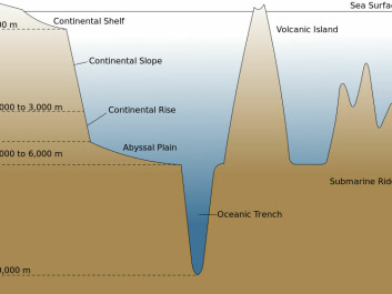 The continental shelf is the extended perimeter of a continent that lies below sea level. These so-called shelf seas are usually relatively shallow, with depths of up to 200 metres.  The Gulf Stream is saltier than the East Greenland Current coming from the cold North. Therefore, since saltwater is heavier than freshwater, the warm Gulf Stream slides underneath the cold current when the two bodies of water come into contact off the southeast coast of Greenland. In periods where the Gulf Stream has been particularly strong, however, the amount of warm water has been so huge that the warm currents have moved into the continental shelf and into the deep Greenlandic fjords and bays in greater quantities. This has enabled the GEUS researchers to observe changes in the composition of organisms that prefer either warm or cold water in the sediment on the continental shelf. (Photo: Wikimedia Commons)