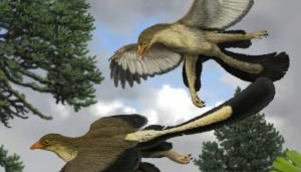 The Archaeopteryx, the oldest known bird, jumped from tree to tree and used its wings for hovering. (Illustration: Jakob Vinther)