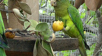 Parrots use sounds like people use names