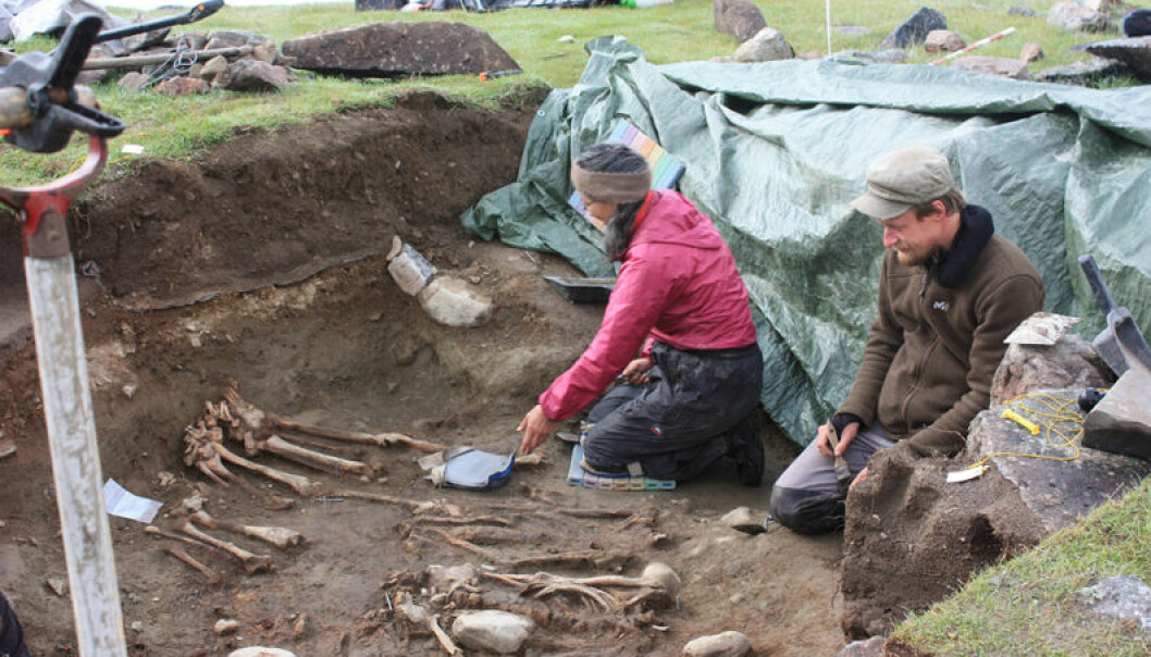 Archaeologists dig up skeletons of Norse settlers in 2010 at the Norse farm Ø64, Igaliku Fjord, Østerbygden, Greenland. (Photo: Jette Arneborg)