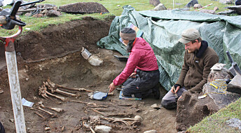 Greenland's Viking settlers feasted on seals, then left