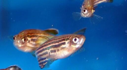 Standard research fish lacks a standard diet