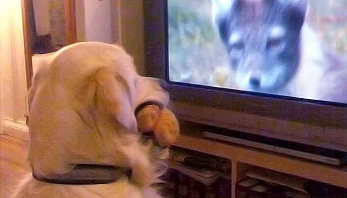Do dogs see what's happening on TV?