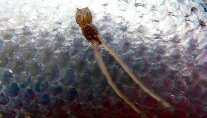 Fighting parasites with parasites