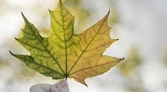 Tree physics determine leaf size