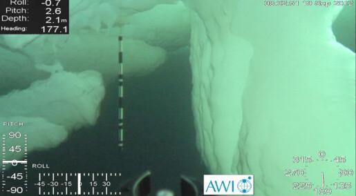 Melting sea ice makes deep-sea animals grow