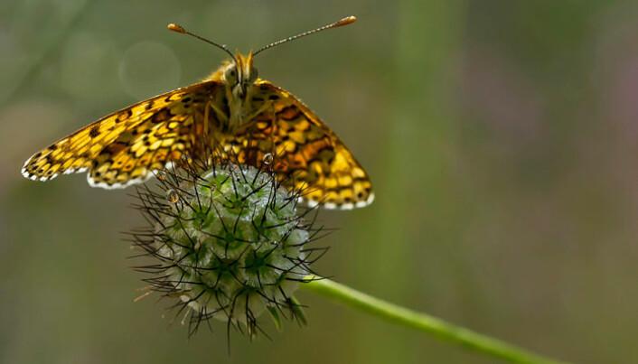 Butterfly hangs on for dear life