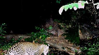 Critically endangered Javan leopard caught on camera