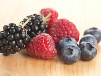 Up to now, scientists have attributed many of the health benefits of eating berries to antioxidants. But perhaps the healthy effect can also be caused by the beneficial substances in the berries interacting with the cell membranes in our bodies, and not only when they act as antioxidants and bind to harmful substances in the body. (Photo: Colourbox)