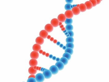 DNA is composed of four nucleotide bases: adenine, thymine, guanine and cytosine, which are located in pairs opposite one another on the two DNA strands. (Photo: Colourbox)
