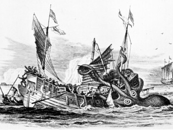 Giant squids gave rise to the mythical sinker of ships, the Kraken, in Norwegian and Icelandic mythology. No giant squids have been observed attacking boats or humans in modern times. (Illustration: Pierre Denys de Montfort/Wikimedia Commons)