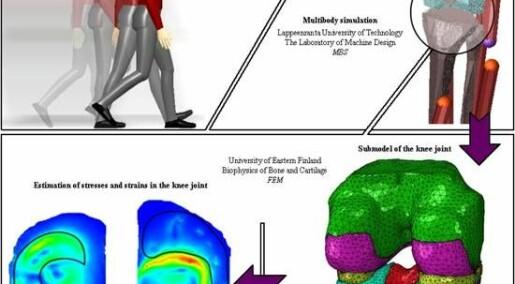Simulation models to determine health of skeletal system