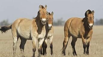 Ancient horse DNA can help us understand evolution