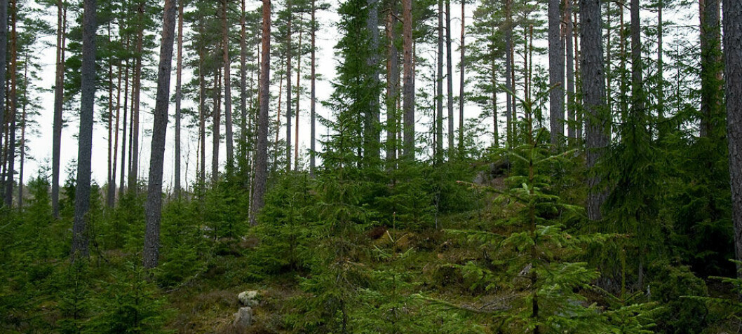 Reindeer thrive on forest diversity