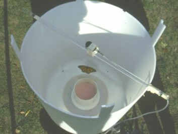 The researchers used this flight simulator to examine the butterflies' direction of flight. The butterfly is hanging from a thin thread, while a gentle stream of air is blowing from below to make the butterfly flap its wings. This enables the researchers to monitor the direction of flight hour by hour. (Photo: Henrik Mouritsen)