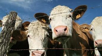 MRSA: scientists on trail of antibiotic resistance