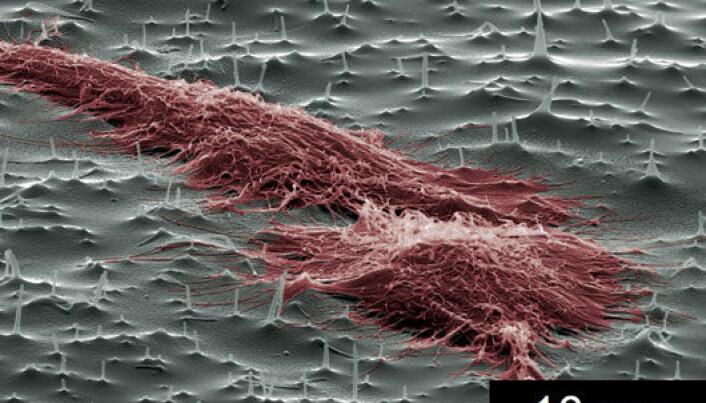 Nano-needles for cells