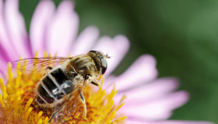 Lack of knowledge about insect pollination