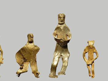 A parade of the five golden figurines that have been found so far in this exciting field on Bornholm. (Photo: René Laursen)