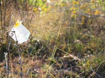 Open plastic containers were hung in shrubs so spiders could use them for a nest. (Photo: Virginia Settepani)