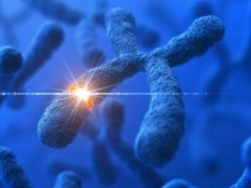 Some genes are only found on the X or Y chromosomes. They can reveal the gender of the person being studied. (Photo: Istockphoto)