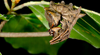 Why insects always hide in the dark