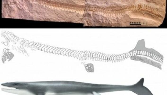Ancient marine lizard had telltale fish tail
