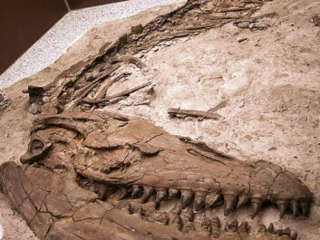 Another Prognathodon fossil, in the collection of the Royal Tyrrell Museum in Canada. (Photo: Wikimedia Commons)