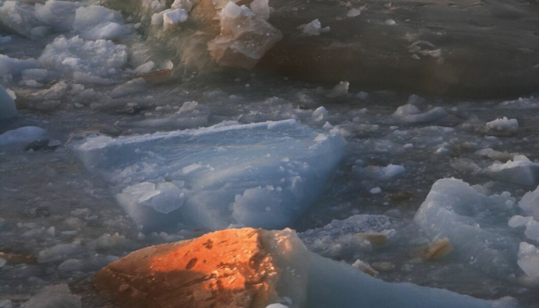 The ice algae secrete gel-like substances in response to environmental stress. New research shows that this micro-gel plays an important role in polar ocean carbon budgets. (Photo: David Thomas