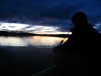 Fishing under test conditions - nets are cast in the dusk in Northern Lapland. (Photo by Kimmo Kahilainen)