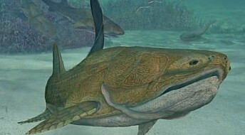 Ancient fish face bears signs of modern jaw