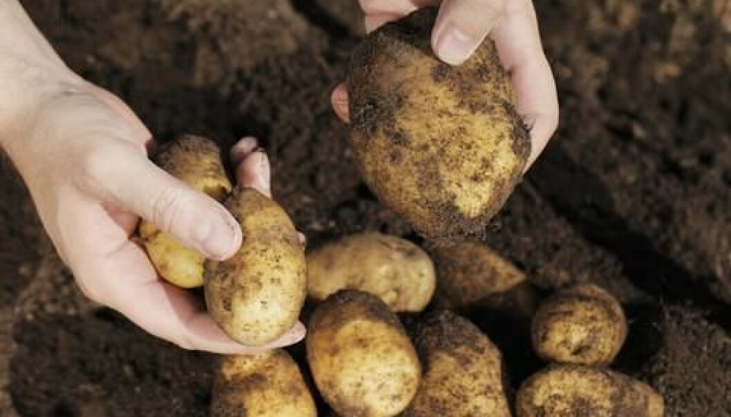 The potato famine hit Ireland the hardest, where a million people lost their lives as a result of the potato blight. (Photo: Colourbox)