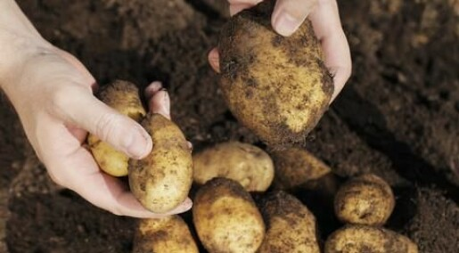 Potato famine genome secrets unlocked