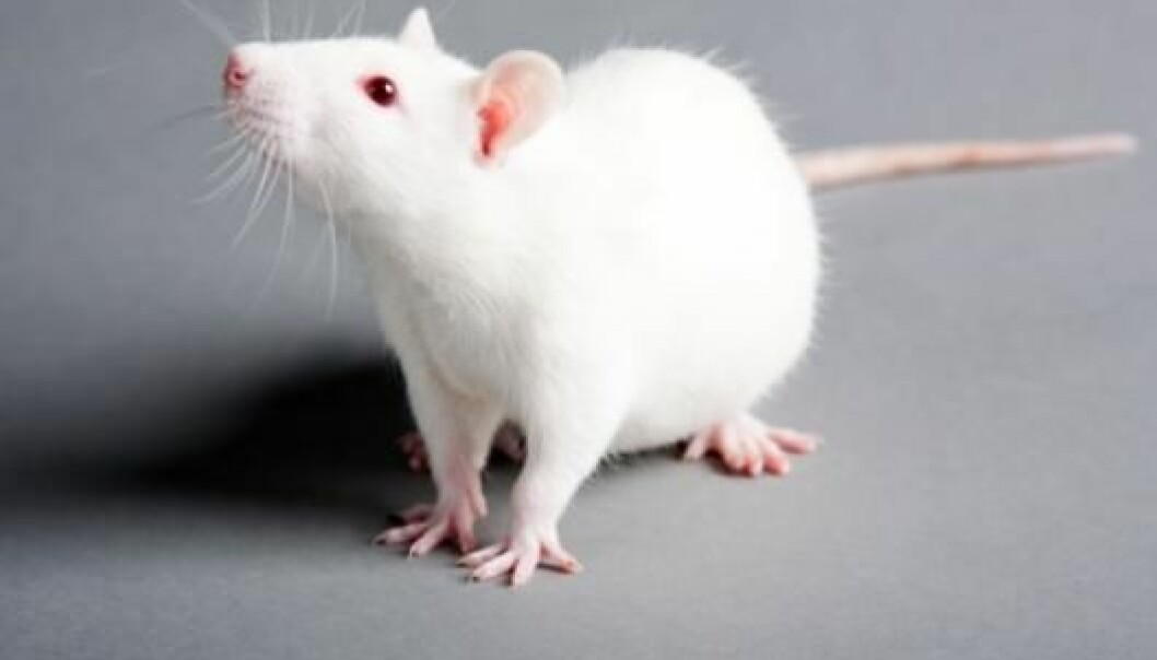 Mice can suffer permanent brain dysfunction if they are exposed to a high dose of the environmental toxin BPA early in life, according to a Swedish study. (Photo: Colourbox.no)