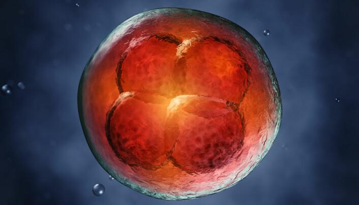Stressed foetal cells harbour hope for cancer treatment