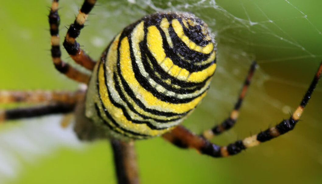 Spiders do not weave their webs just to catch prey. They also use the web as a safety line when they are in danger of falling, or if they want to throw themselves into the air. Some spiders also weave a web around objects such as eggs and food that they wish to preserve. (Photo: Shutterstock)